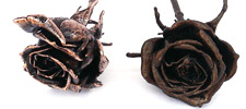 Copper Roses & Bronze Roses